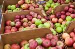 apple harvest (website)