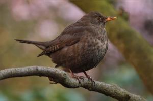 bird-741174_960_720
